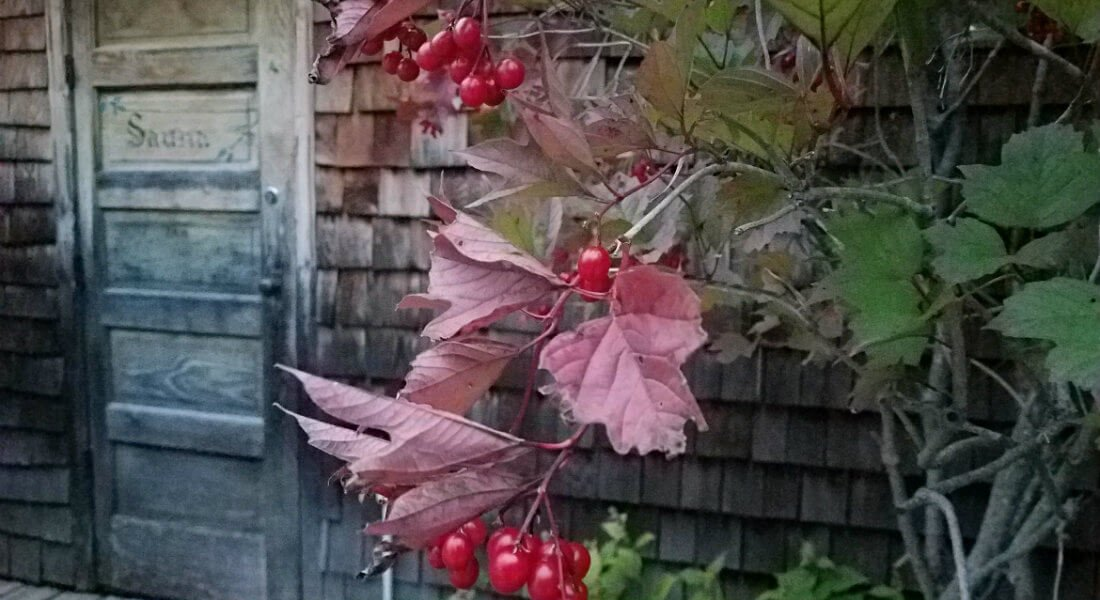 Plant with green and red leaves growing next to a rustic wood building