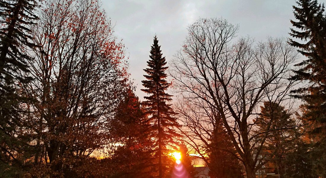 Orange sun setting behind the silhouette of different shaped trees in the winter