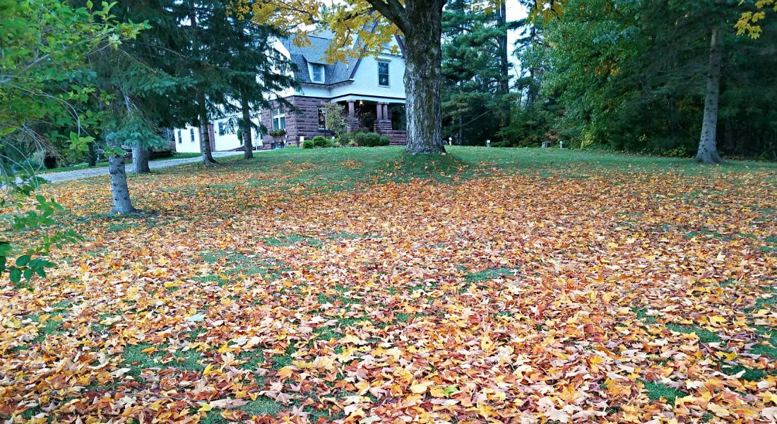 Expansive lawn covered in autumn leaves surrounded by trees and the inn in the background