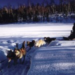 Dogsledding in Bayfield WI