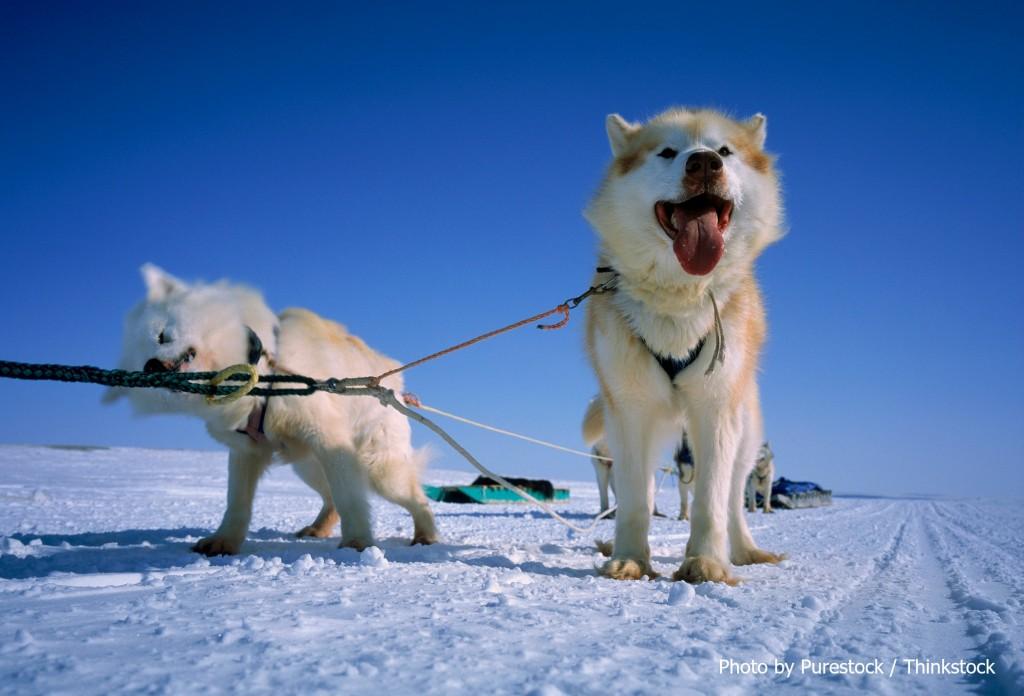 Best Dog Sledding In Us